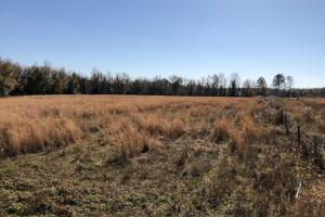 Islandton Hunting & Recreational Farm/Timber Land in Colleton, SC (23 of 60)