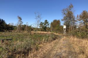 Islandton Hunting & Recreational Farm/Timber Land in Colleton, SC (42 of 60)
