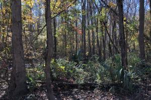 Islandton Hunting & Recreational Farm/Timber Land in Colleton, SC (8 of 60)