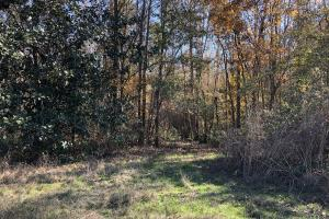 Islandton Hunting & Recreational Farm/Timber Land in Colleton, SC (6 of 60)