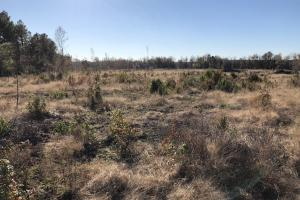 Islandton Hunting & Recreational Farm/Timber Land in Colleton, SC (49 of 60)