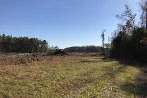 Islandton Hunting & Recreational Farm/Timber Land in Colleton, SC (33 of 60)