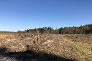 Islandton Hunting & Recreational Farm/Timber Land in Colleton, SC (35 of 60)