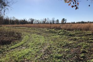 Islandton Hunting & Recreational Farm/Timber Land in Colleton, SC (26 of 60)