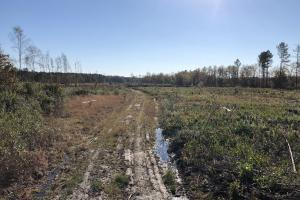 Islandton Hunting & Recreational Farm/Timber Land in Colleton, SC (46 of 60)