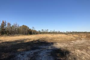 Islandton Hunting & Recreational Farm/Timber Land in Colleton, SC (37 of 60)