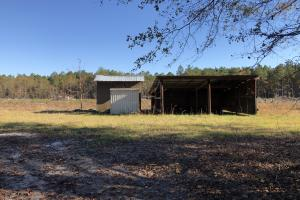 Islandton Hunting & Recreational Farm/Timber Land in Colleton, SC (31 of 60)