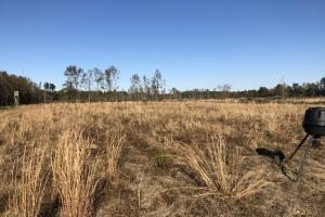 Islandton Hunting & Recreational Farm/Timber Land in Colleton, SC (40 of 60)