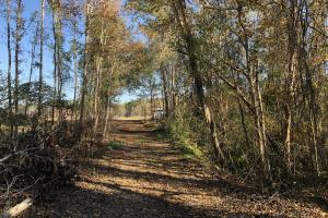 Islandton Hunting & Recreational Farm/Timber Land in Colleton, SC (27 of 60)