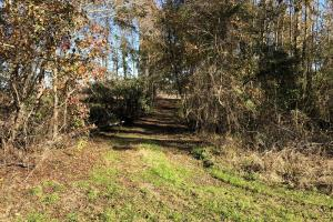 Islandton Hunting & Recreational Farm/Timber Land in Colleton, SC (25 of 60)