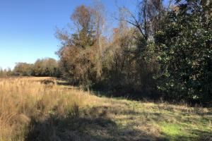 Islandton Hunting & Recreational Farm/Timber Land in Colleton, SC (10 of 60)