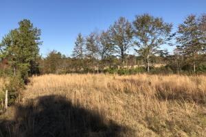 Islandton Hunting & Recreational Farm/Timber Land in Colleton, SC (45 of 60)