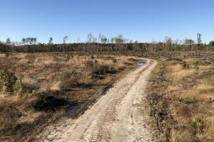 Islandton Hunting & Recreational Farm/Timber Land in Colleton, SC (48 of 60)