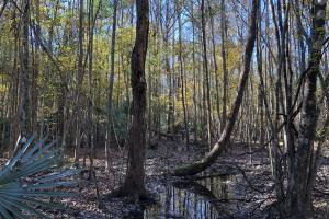 Islandton Hunting & Recreational Farm/Timber Land in Colleton, SC (9 of 60)