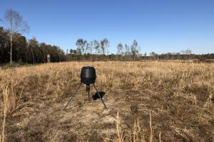 Islandton Hunting & Recreational Farm/Timber Land in Colleton, SC (39 of 60)