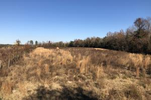 Islandton Hunting & Recreational Farm/Timber Land in Colleton, SC (4 of 60)