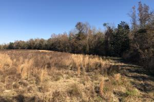 Islandton Hunting & Recreational Farm/Timber Land in Colleton, SC (5 of 60)