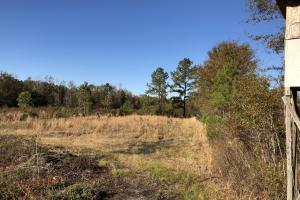 Islandton Hunting & Recreational Farm/Timber Land in Colleton, SC (43 of 60)