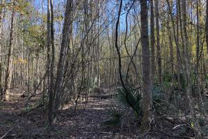 Islandton Hunting & Recreational Farm/Timber Land in Colleton, SC (12 of 60)