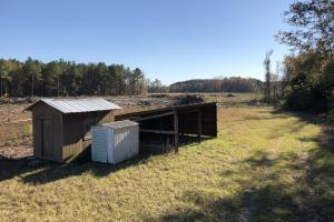 Islandton Hunting & Recreational Farm/Timber Land in Colleton, SC (34 of 60)