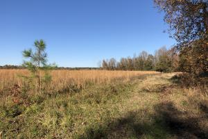 Islandton Hunting & Recreational Farm/Timber Land in Colleton, SC (21 of 60)