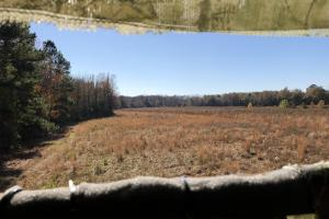 Islandton Hunting & Recreational Farm/Timber Land in Colleton, SC (16 of 60)