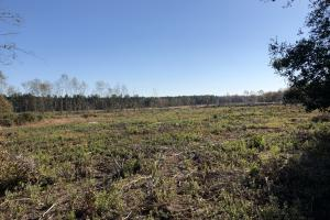 Islandton Hunting & Recreational Farm/Timber Land in Colleton, SC (44 of 60)