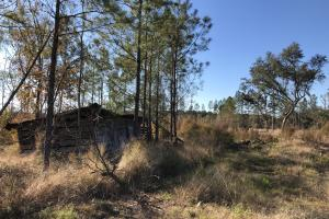 Islandton Hunting & Recreational Farm/Timber Land in Colleton, SC (53 of 60)