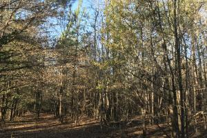 Anderson Interstate 85 Development and Homesite Land in Anderson, SC (10 of 13)