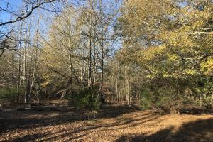 Anderson Interstate 85 Development and Homesite Land in Anderson, SC (6 of 13)