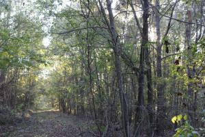Lowndesboro Hunting, Recreation, Farming, and Timber in Lowndes, AL (11 of 14)