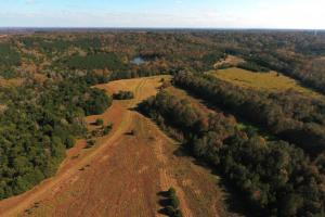 Lowndesboro Hunting, Recreation, Farming, and Timber in Lowndes, AL (3 of 14)