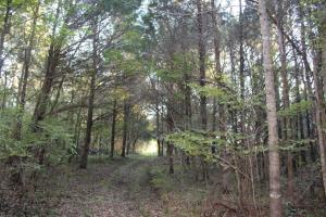 Lowndesboro Hunting, Recreation, Farming, and Timber in Lowndes, AL (12 of 14)