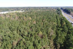 40.5 +/- acres of 15 year old timber  (2 of 14)