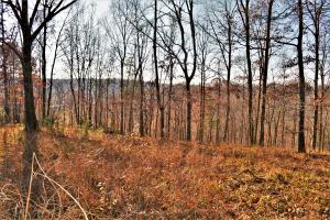 Cleared Potential homesite with bluff view (11 of 22)