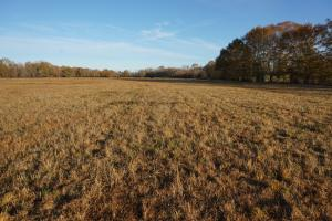 Lower Hull Road Pasture Land - Tuscaloosa County AL