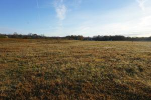 Lower Hull Road Pasture Land in Tuscaloosa, AL (2 of 7)