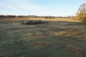 Lower Hull Road Pasture Land in Tuscaloosa, AL (6 of 7)