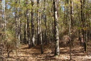64 acres, timber & hunting land in Clark, AR (2 of 2)