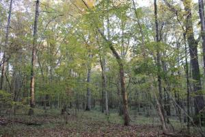 Woodley Road Timber, Hunting, and Home Sites in Montgomery, AL (3 of 17)