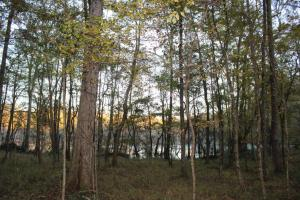 Woodley Road Timber, Hunting, and Home Sites in Montgomery, AL (4 of 17)
