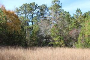 Woodley Road Timber, Hunting, and Home Sites in Montgomery, AL (15 of 17)