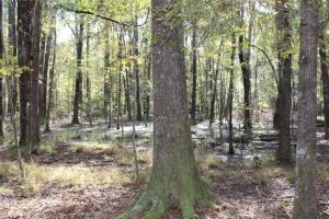 South Montgomery Timber and Hunting - Montgomery County AL