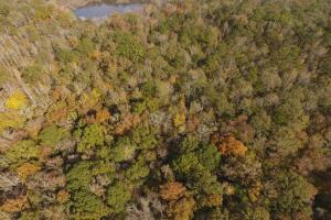 Pike Road Timber and Hunting Property - Montgomery County AL