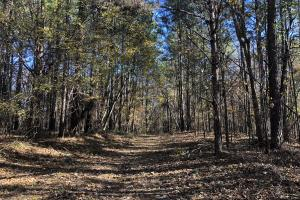 Enid Lake Hunting and Timber Investment - Yalobusha County MS