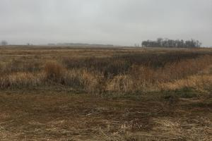 Prime Pheasant Ground - CRP Cash in Lincoln, SD (8 of 8)