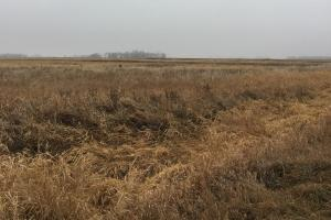 Prime Pheasant Ground - CRP Cash in Lincoln, SD (2 of 8)