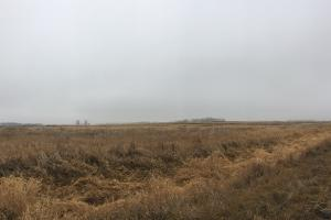 Prime Pheasant Ground - CRP Cash in Lincoln, SD (7 of 8)