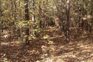 Escatawpa Recreation and Investment Tract - Washington County AL