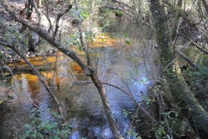 Blackwater River Headwaters Hunting Retreat in Escambia, AL (17 of 28)
